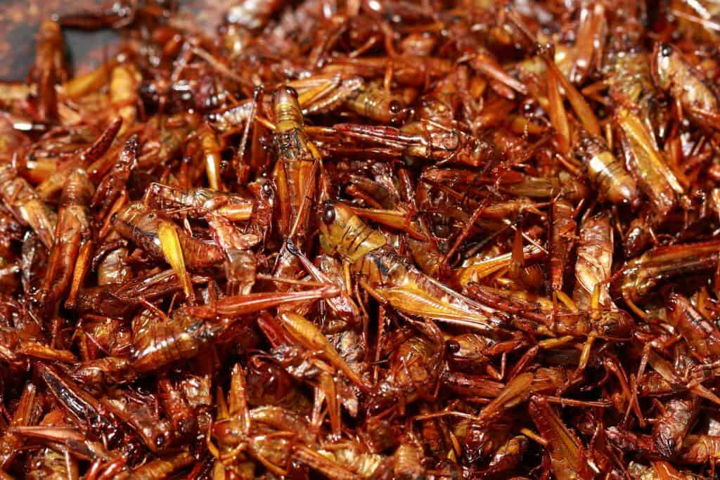 Inago - Grasshoppers in Soy Sauce