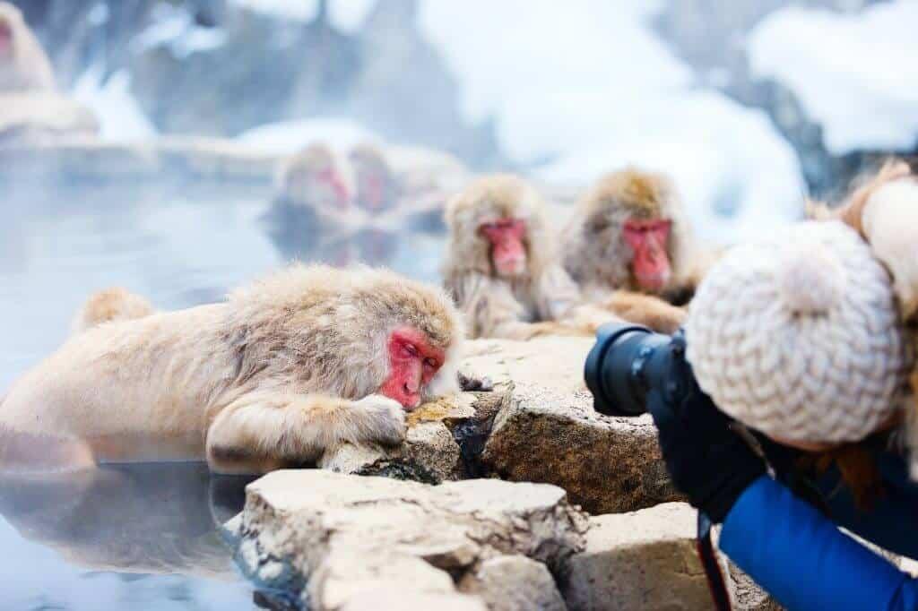 Jigokudani Monkey Onsen Picture