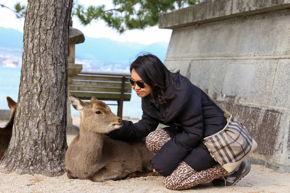 Miyajima - Taking a Picture With the Deer