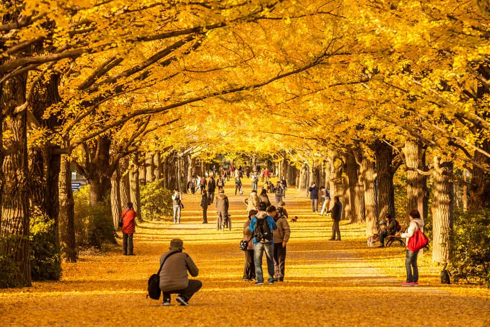 Best Time to Visit Japan - Fall Autumn Leaves