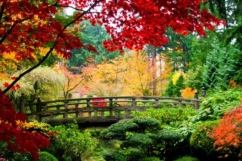 Best Time to Visit Japan - Fall Kouyou