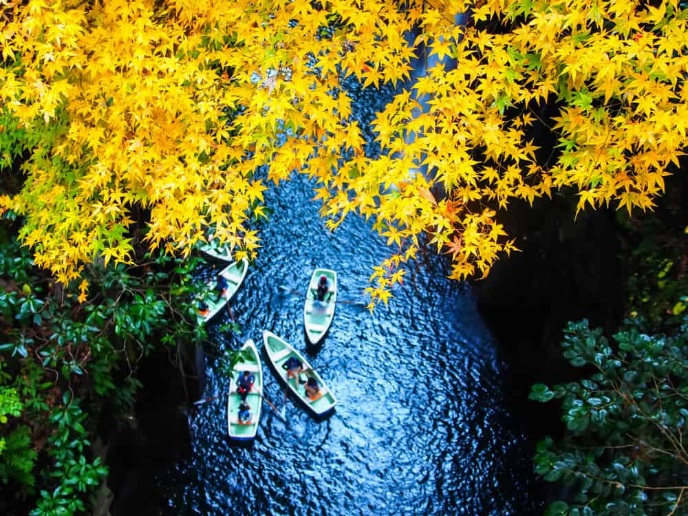 Best Time to Visit Japan - Fall Yellow Leaves