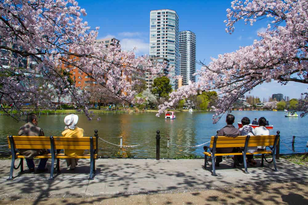 Best Time to Visit Japan - Sping Cherry Blossom