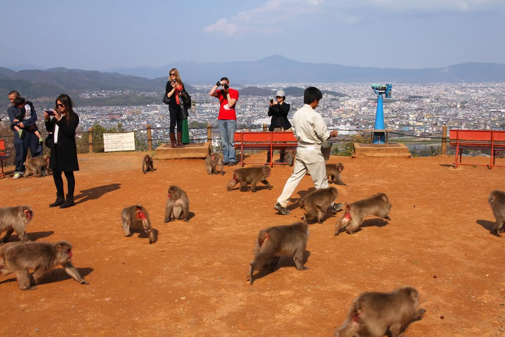 Monkey Park Iwatayama - Taking Pictures