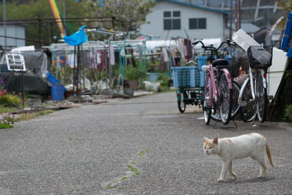 Amazing Animal Islands in Japan - Cat Roaming the Street