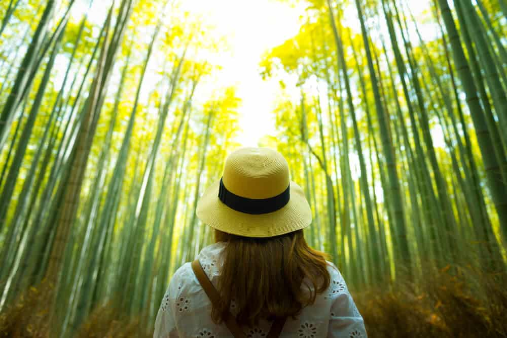 Japan on a Budget - Free Attractions Walking in the Bamboo Forest