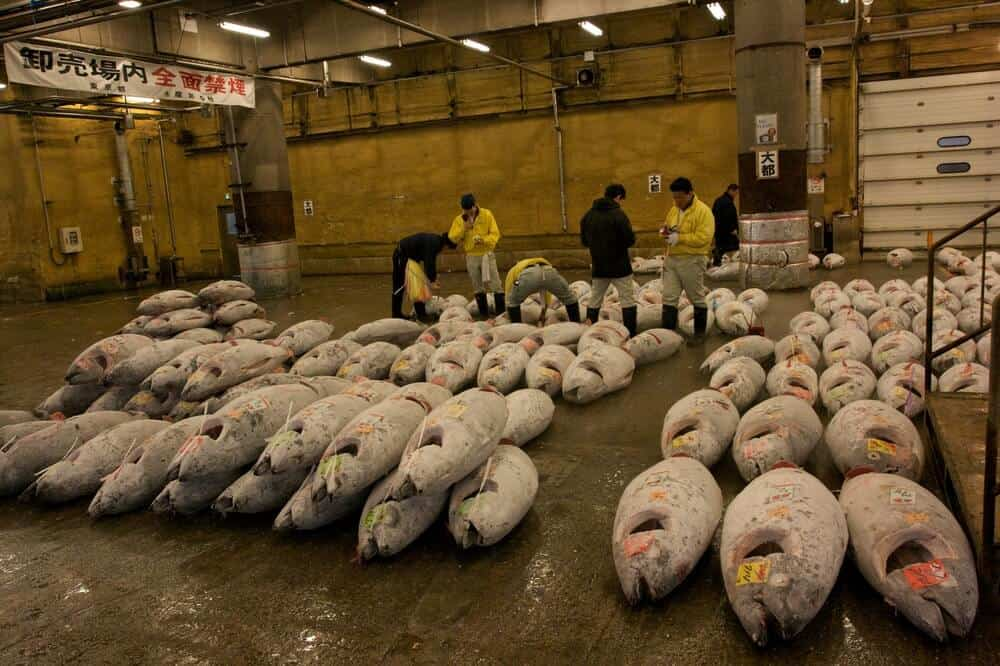 Tsukiji Fish Market - Tuna Auction