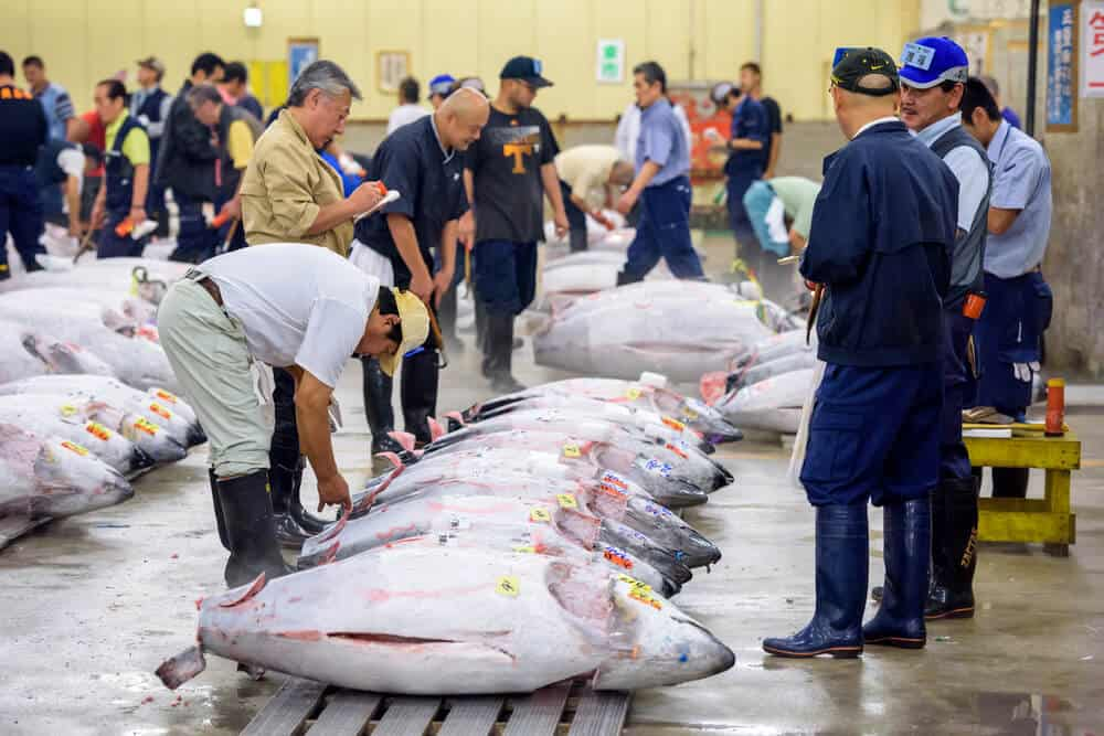 Tsukiji Fish Market - Tuna Inspection