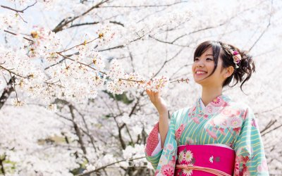 A young, Asian woman dressed in a blue and pink kimono style outfit looking at Japan Cherry Blossom trees.