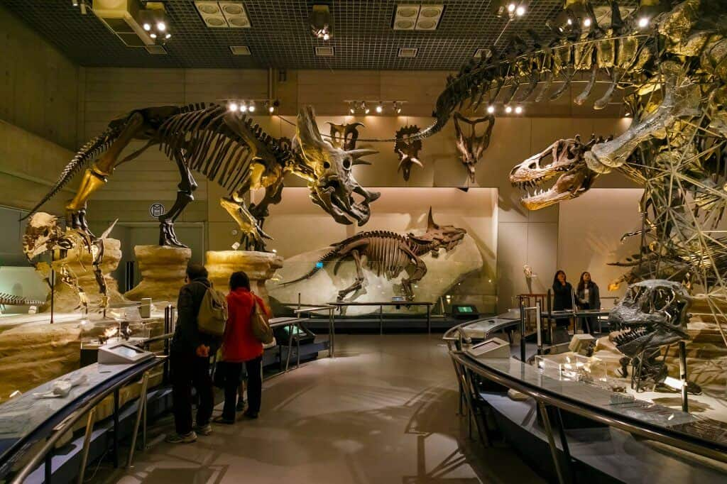 National Museum of Nature and Science Dinosaur Exhibit