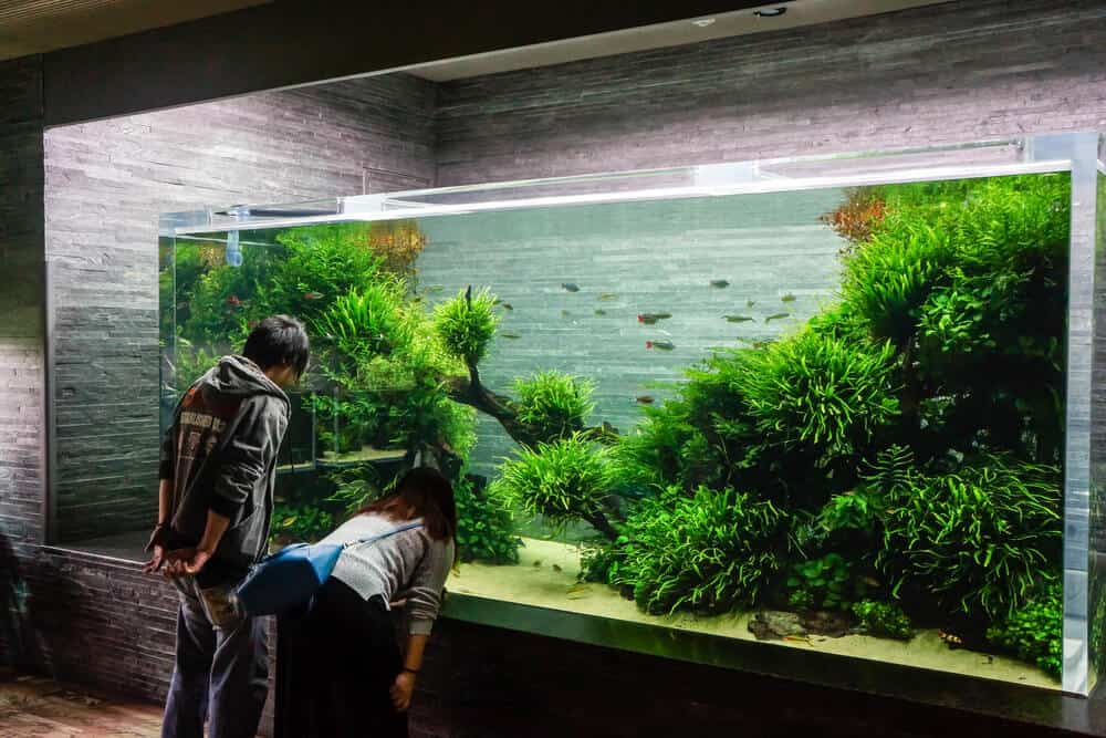 Sumida Aquarium Tank Display
