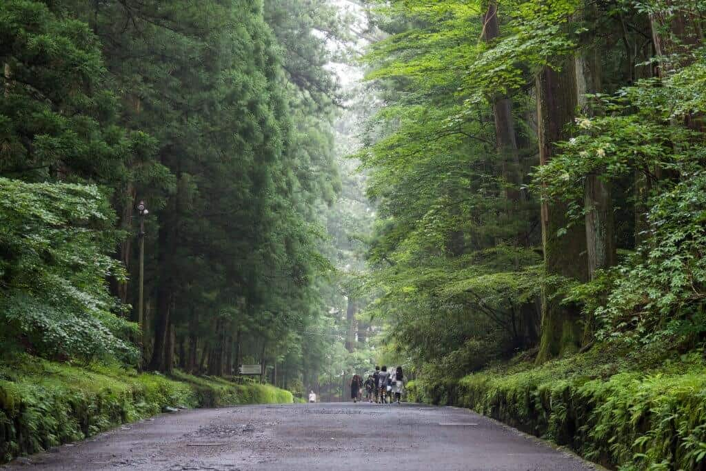 Nikko Futarasan Shrine Forest