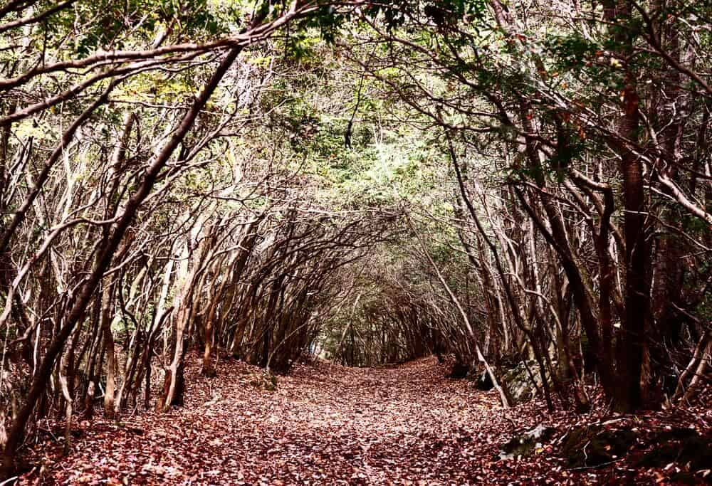 Aokigahara Forest Tunnel Trail