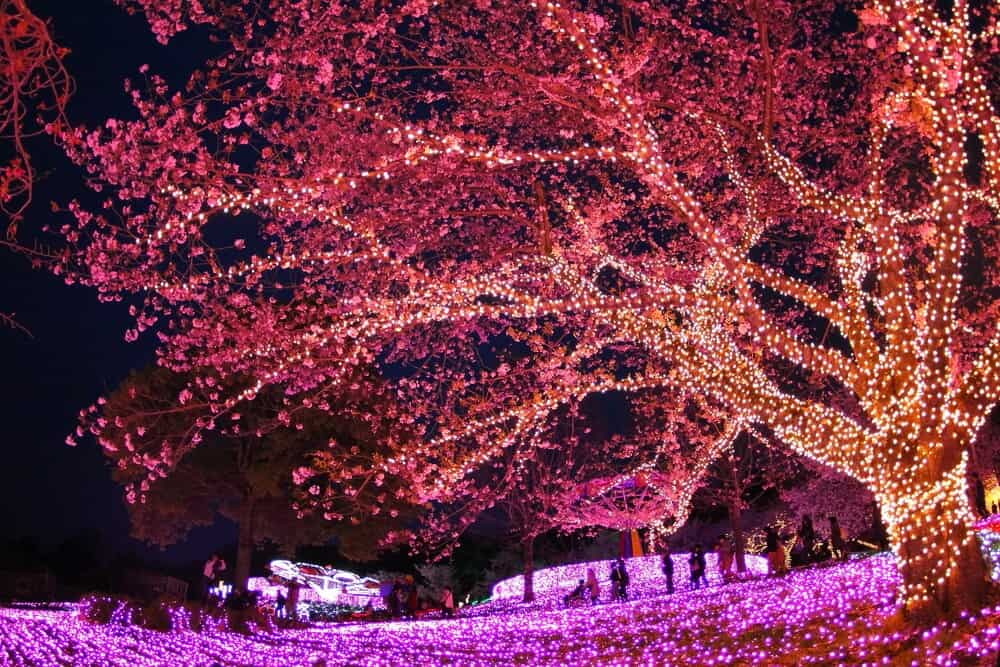 Sagamiko Illumination Tree
