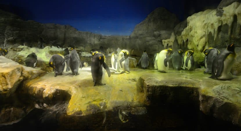 Osaka Aquarium Penguins