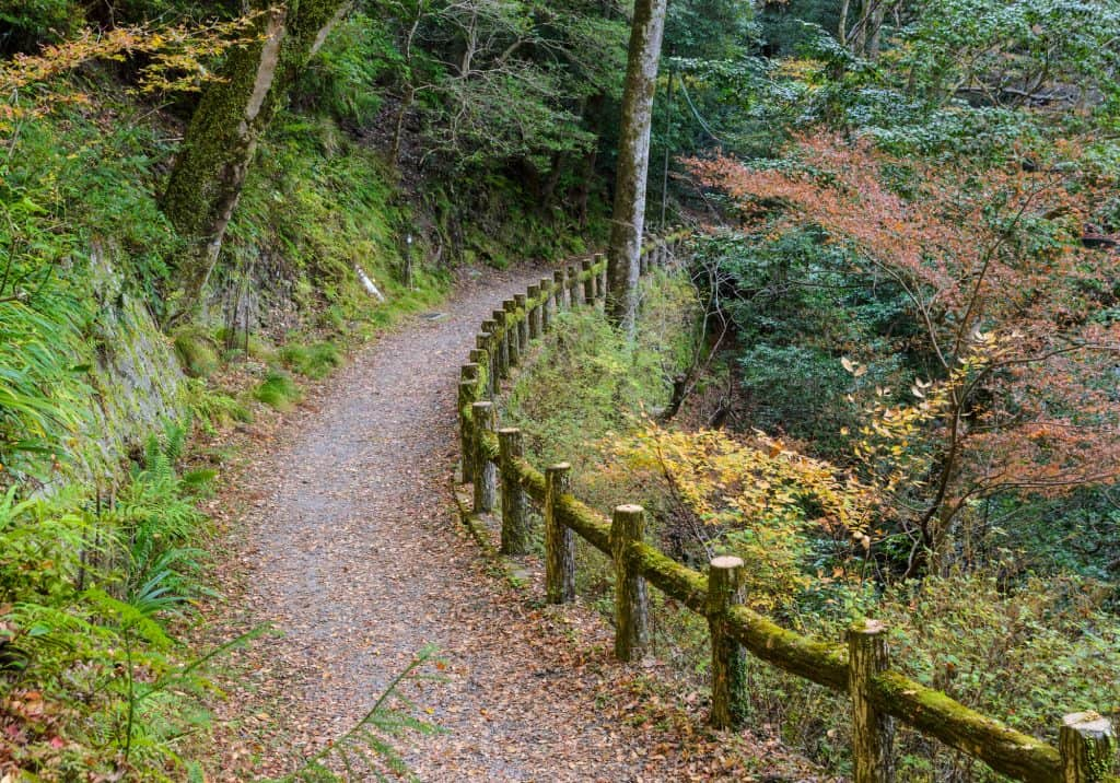 A hiking trail in Minoo Park in Osaka, Japan. The path is on a dirt trail with trees and plants all around.