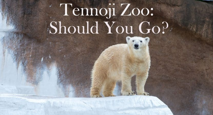 A Polar bear standing at the end of a ice cliff that is in the Tennoji Zoo in Osaka, Japan